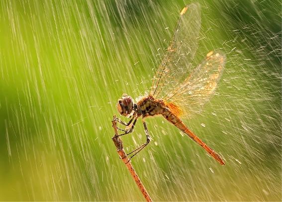 โรคร้ายที่แฝงมากับสายฝน
